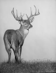 drawn hunting whitetail deer pencil and in color drawn hunting