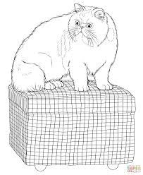 persian cat coloring page free printable coloring pages