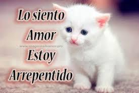 imagenes de gatitos sin frases imágenes de lindos gatitos con la frase perdóname mi amor