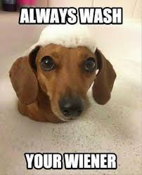 Wiener Dog Meme - dachshund memes and wiener dog humor dog jokes wiener dogs and dog