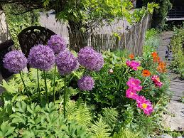 Flowersbybillbush Montreal Postal Code Map - hyacinths how to plant grow and care for hyacinth flowers the