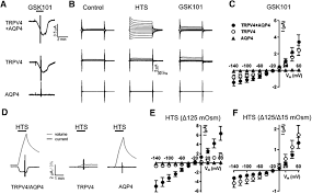 trpv4 and aqp4 channels synergistically regulate cell volume and