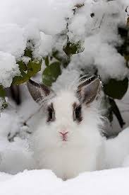 Emma Freud Rabbit Hutch 424 Best Rabbits Images On Pinterest Animals Bunny Rabbits And