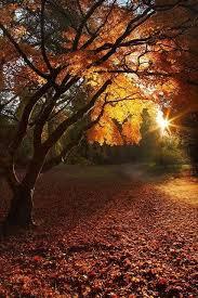 92 fall colors images autumn fall autumn