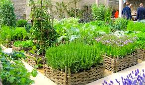 herbal garden herb gardening container gardening