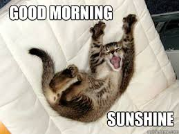 Good Morning Cat Meme - good morning sunshine morning 1 quickmeme
