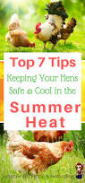 beat the heat with these top 7 tips for keeping your hens safe and