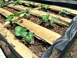 pallet garden bed u2013 bookofmatches co