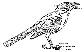 birds of yosemite national park 1954 1963 by cyril a stebbins