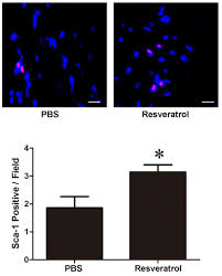 Assmann B Om El Resveratrol Activates Endogenous Cardiac Stem Cells And Improves