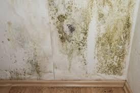 moisissure mur chambre peinture anti moisissure prix comment la choisir et l