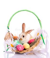 easter basket bunny bunny in easter basket stock image image of fluffy 24091787