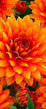 Yellow Orange Flowers - best 25 orange flowers ideas on pinterest flowers beautiful