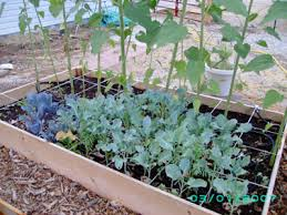 shady vegetable gardens off the grid news