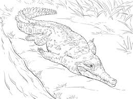 orinoco crocodile coloring page free printable coloring pages