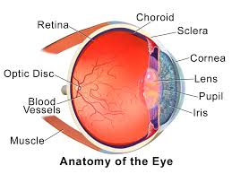 Human Anatomy In Pdf Tag Human Eye Structure And Function Pdf Archives Human Anatomy