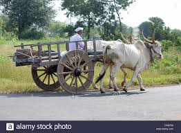 indian cart traditional indian farm cart stock photos u0026 traditional indian