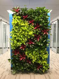 floor plant green living walls are perfect for any space plant pros