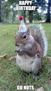 Birthday Animal Meme - super birthday squirrel memes imgflip