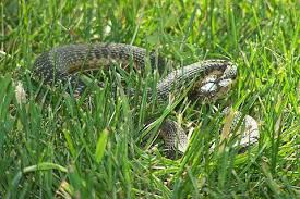 Snake Holes In Backyard How To Keep Snakes Away