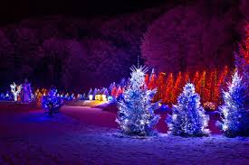 how to wrap outdoor trees with christmas lights sacharoff decoration