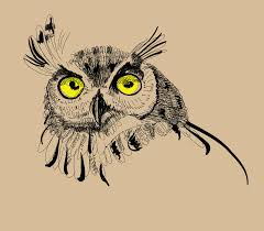 owl drawing vector illustration stock illustration image 64541598