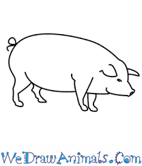 draw pig