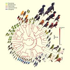 ornithologists map family tree of mysterious cotinga birds biology