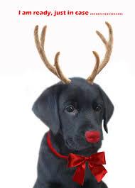 christmas dog replacing rudolph free printable greeting cards