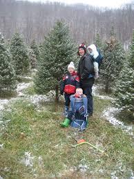 christmas trees hutton loyd tree farm