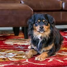 levrette sur canapé chien canapé maison de photo gratuite sur pixabay