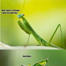 Mantis Meme - mantis praying by samuel collins 35 meme center