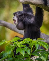 Under Canopy Rainforest by Howler Monkeys Dwell Among The Tree Branches Of The Canopy These
