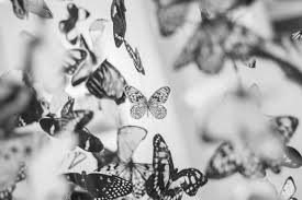 Black And White Decor by Free Stock Photo Of Black And White Butterflies Decor