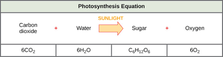 Light Independent Reactions Definition Overview Of Photosynthesis Boundless Biology