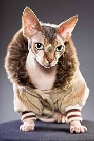 sphynx sweaters get to the sphynx the aliens of the cat catster