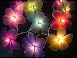 decorative lights kris allen daily