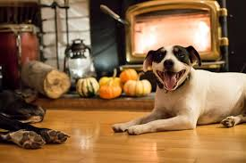 thanksgiving and pets do s and don ts figo pet insurance