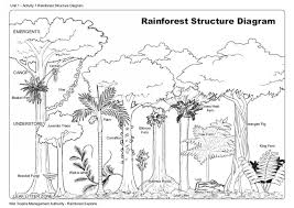 rainforest structure wet tropics management authority