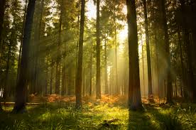 forest images Japanese 39 s 39 forest bathing 39 scientifically proven to improve jpeg
