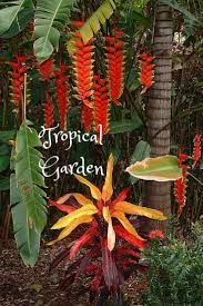246 best tropical flowers images on pinterest tropical flowers
