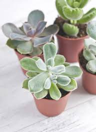 the best office plants plants that will thrive on your desk