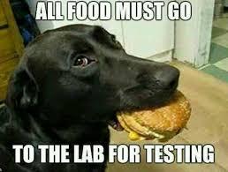 181 best memes animal humor images on pinterest funny stuff