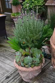 1651 best container garden 2015 images on pinterest gardens