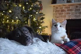 comment eviter les griffes de sur canape comment eviter les griffes de sur canape lovely perro gato high