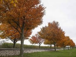fall colors iowa