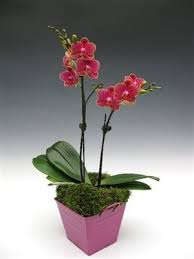 orchid centerpieces potted orchids as centerpieces risky weddings wedding