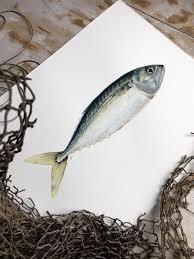 jessi fikan original watercolor painting of a mackerel fish animal art fishing art nautical
