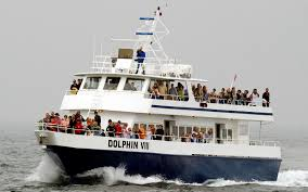 Whale Watches Cape Cod - dolphin fleet whale watch travel leisure