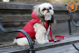 Canine Styles Red Dog Coat This Signature Parka w Faux Fur Trim